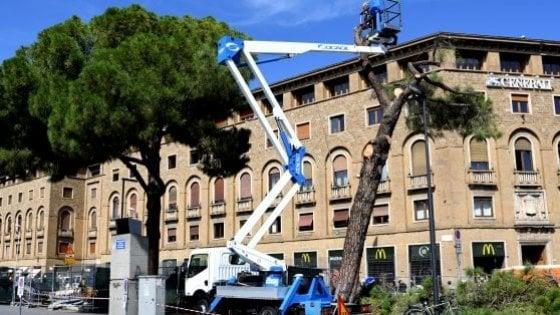 Taglio degli alberi a Firenze, rinviati a giudizio 7 dipendenti comunali