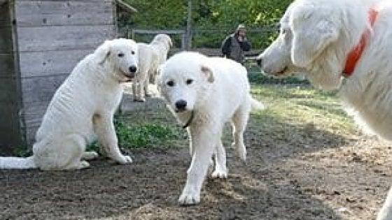 Firenze,  liberati otto cani in una casa al Galluzzo