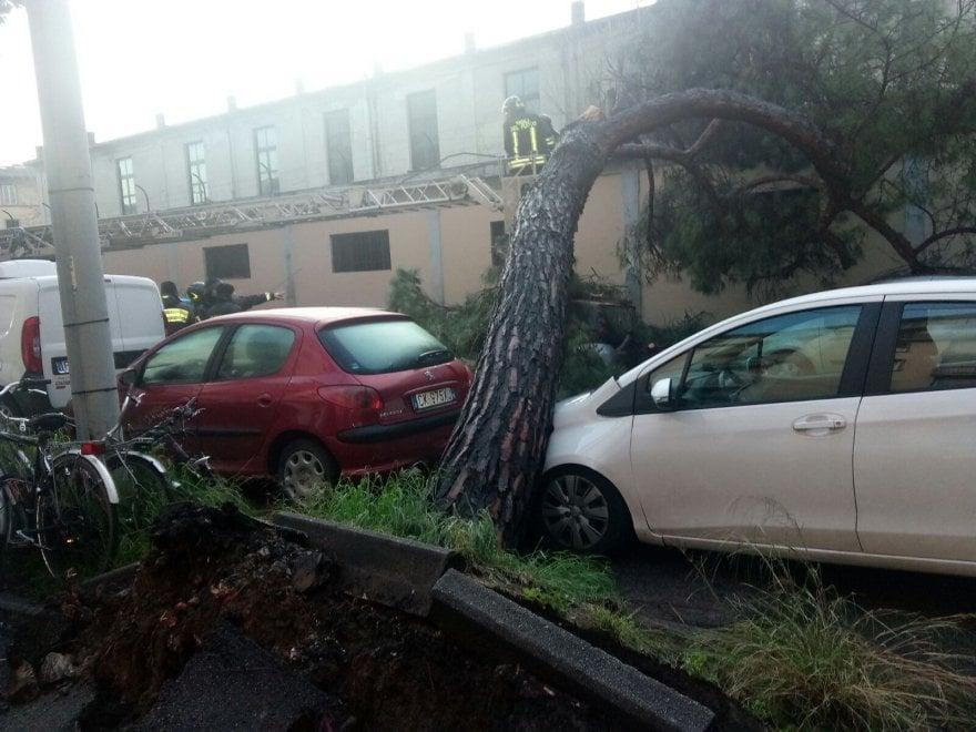 Firenze, pino di 12 metri crolla in via Mariti