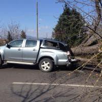 Firenze, albero crolla in strada e si schianta su un'auto