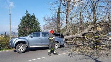 Firenze, cade grosso albero in viale Galilei   Guarda le foto
