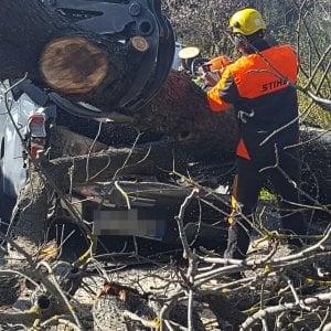 Firenze, altro albero caduto per il vento - Repubblica it