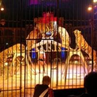 Niente animali negli spettacoli del circo, il Tar dà ragione al Comune