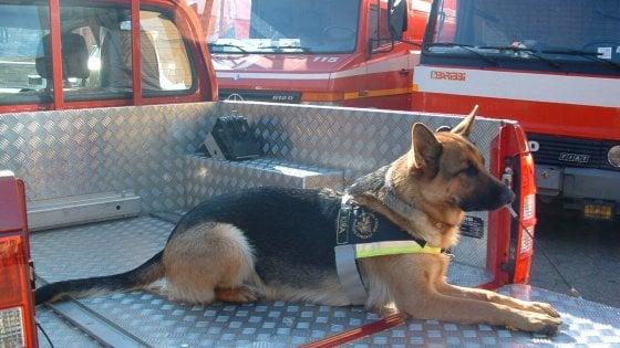 Addio a Kira, il cane da soccorso dei vigili del fuoco