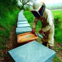 Il maltempo sconvolge le api: anche in Toscana crolla la produzione di miele