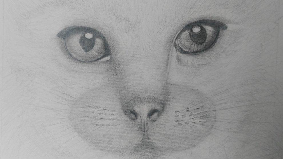 Gli animali disegnati a matita da Alessandra Pagliai