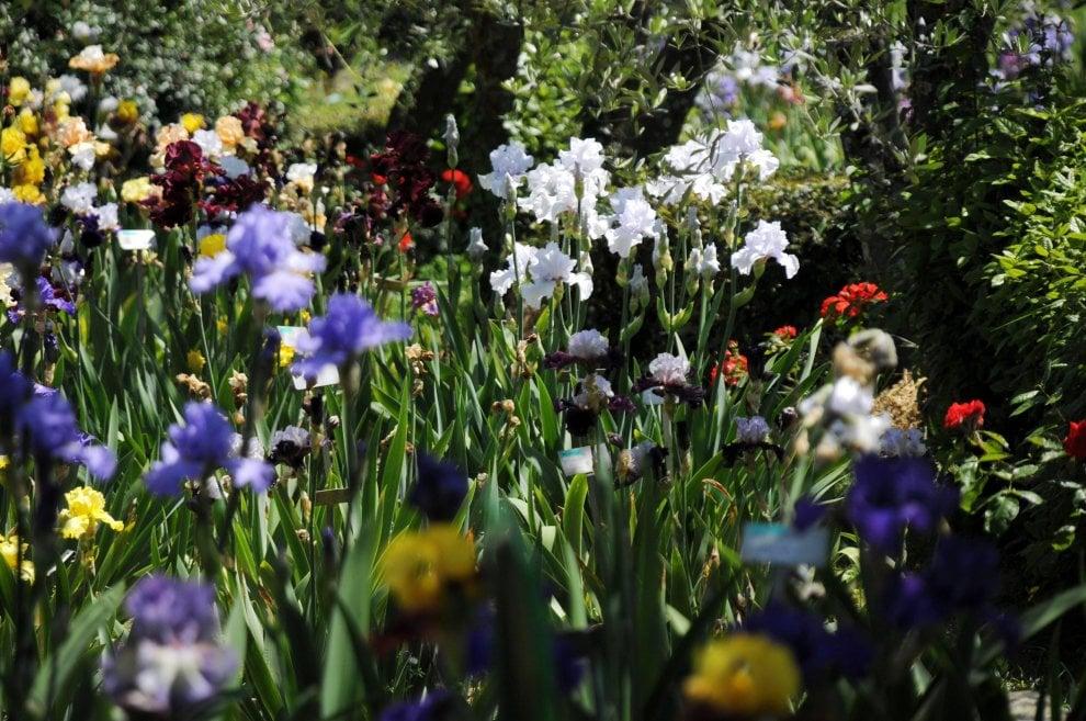 Firenze al giardino dell 39 iris shakespeare a colazione - Giardino dell iris firenze ...