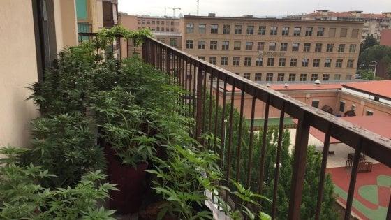 Firenze, maxi serra di marijuana sul balcone di un appartamento a Novoli: due arresti