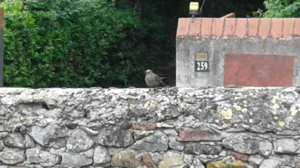 """Alberi tagliati a Sesto Fiorentino, gli abitanti protestano: """"Strage di nidi"""""""