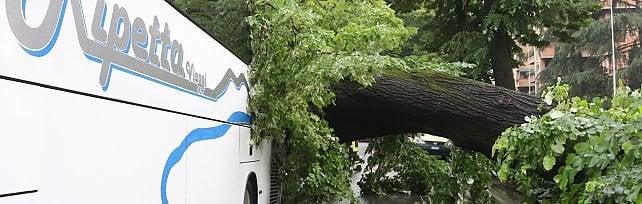 Firenze, crolla un albero   foto   su un bus turistico: quattordici feriti