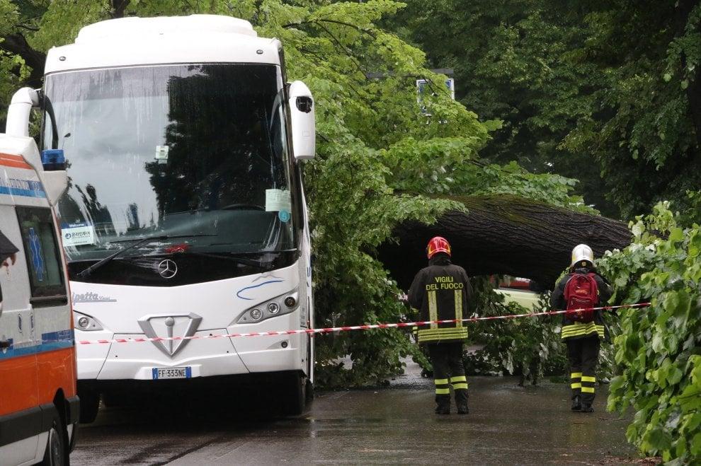 Firenze, bus di turisti travolto da un albero