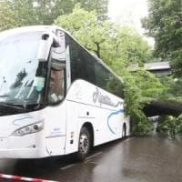 Firenze, albero cade sul bus di turisti: procura apre un'inchiesta