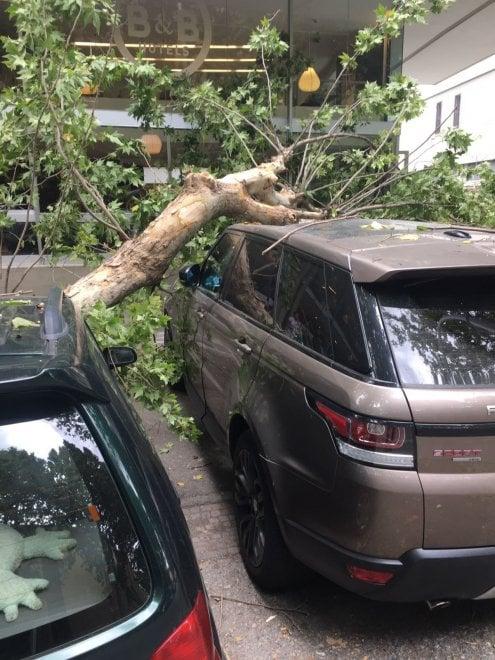 Firenze, grosso ramo crolla su tre auto