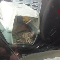 Arezzo, libera i gatti in macchina e loro lo chiudono fuori dalla vettura