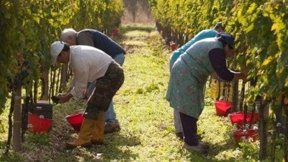 Caporalato, anche in Toscana parte la campagna contro lo sfruttamento