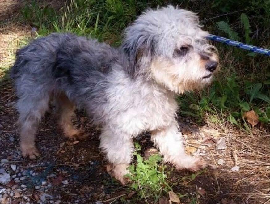 Abbandonati in una ex fornace a Bagno a Ripoli: salvati otto cani