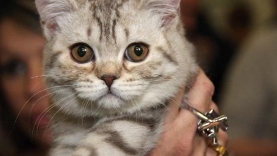 Firenze, abbandona 46 gatti in casa e se ne va in America