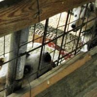 Firenze, sgomberato il canile del Termine: volontari stesi a terra per impedire