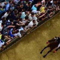 Palio di Siena, assegnati i cavalli: esulta la Lupa