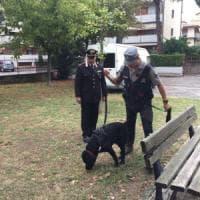 Scandicci, cani avvelenati dalle esche: blitz dei carabinieri nei giardini