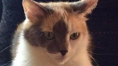 """""""Salvata in un cassonetto appena nata, uccisa da un cacciatore vicino casa"""": la sfortunata storia della gatta Marisa"""