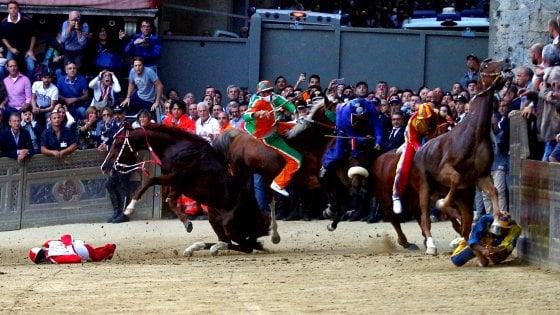 Palio di Siena: morto il cavallo Raol, abbattuto dopo essere stato ferito