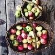 """Non vedenti """"assaggiatori"""" delle antiche mele della Lucchesia"""