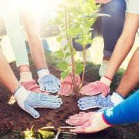 Firenze, bambini custodi dell'ambiente: monitoreranno 250 alberi
