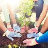 Bambini custodi dell'ambiente: monitoreranno 250 alberi
