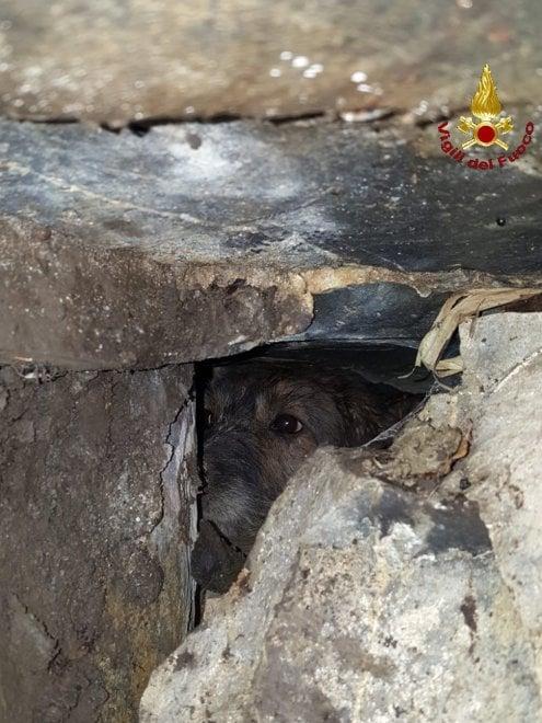 Tre cani si infilano nella tana dell'istrice e restano prigionieri