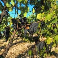 Vi.Te. la rivincita dei vignaioli naturali parte dalla Toscana