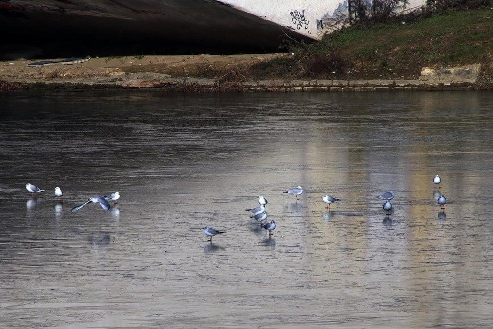 Firenze, l'Arno è uno spettacolo: un velo di ghiaccio ricopre il fiume