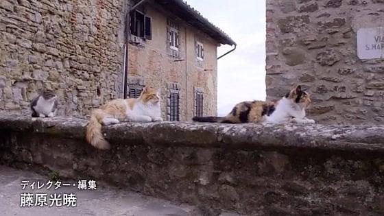 San Gimignano, i gatti del borgo toscano superstar nella tv giapponese
