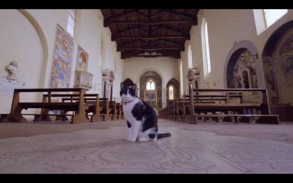 Tra torri e vigneti, i gatti di San Gimignano protagonisti di un documentario giapponese