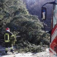 Vento forte in Toscana, decine di interventi dei vigili del fuoco nel Grossetano