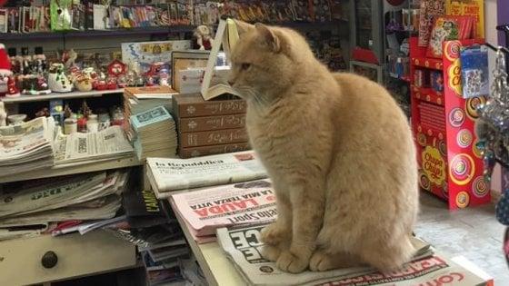 Sesto, addio a Nando, il gatto edicolante star del web