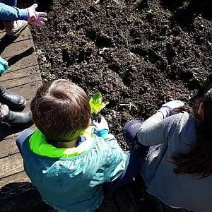 """""""L'orto a scuola"""", così a Pienza i bambini imparano a coltivare e mangiare le verdure"""