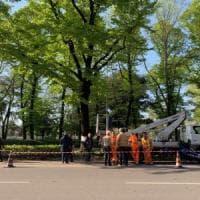 Firenze, esposto del Comune contro chi ha forato l'albero per salvarlo dall'abbattimento