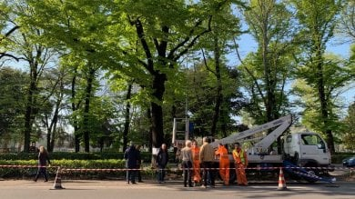 Esposto del Comune contro chi ha forato l'albero per salvarlo dall'abbattimento