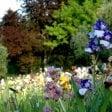 Firenze, è aperto il giardino dell'Iris: ingresso gratuito
