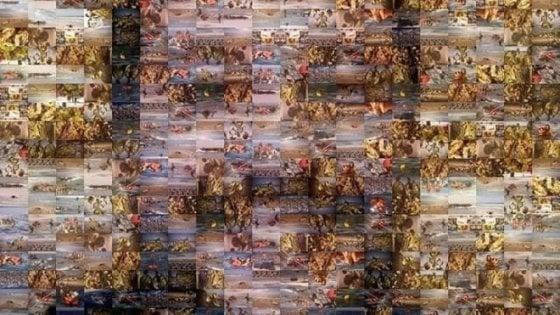 """Il liceo artistico di Pisa ritrae Salvini con immagini di naufragi. Ceccardi: """"Rimuovete quel poster"""""""