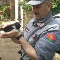 Nel Fiorentino, abbandona gattina di 3 settimane in strada: denunciato