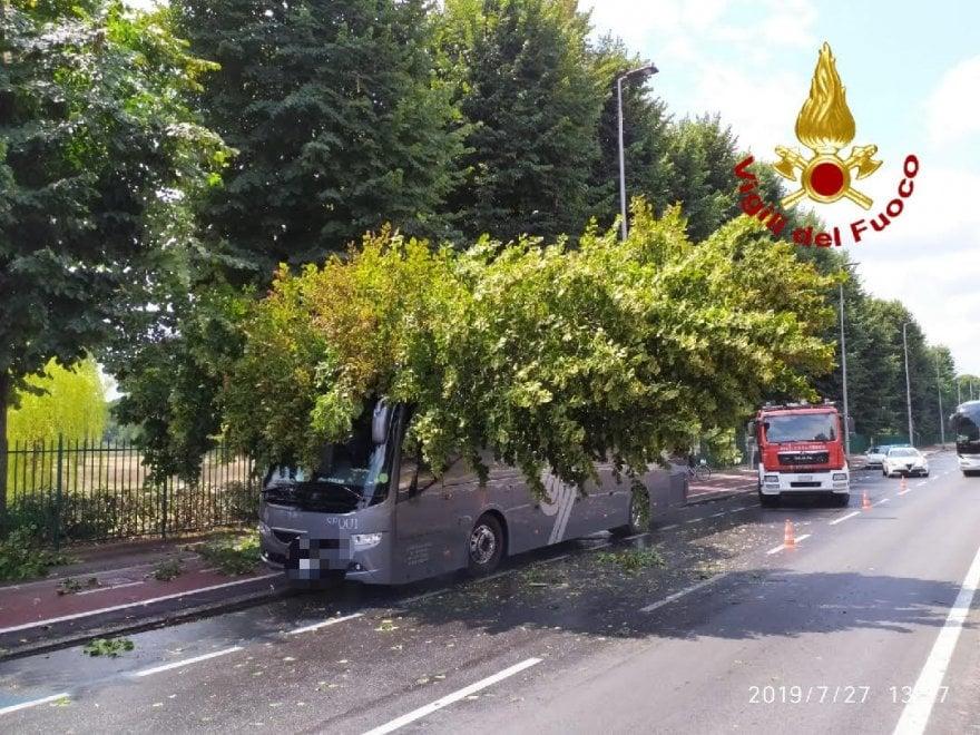 Firenze, albero crolla su un pullman: nessun ferito