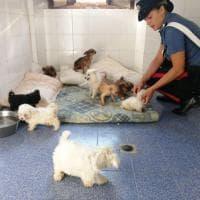 Massa, stroncato traffico illegale di cuccioli di cane dalla Serbia