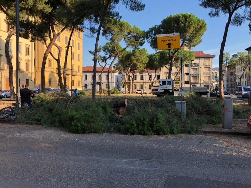 Firenze, via al taglio degli alberi in piazza della Vittoria