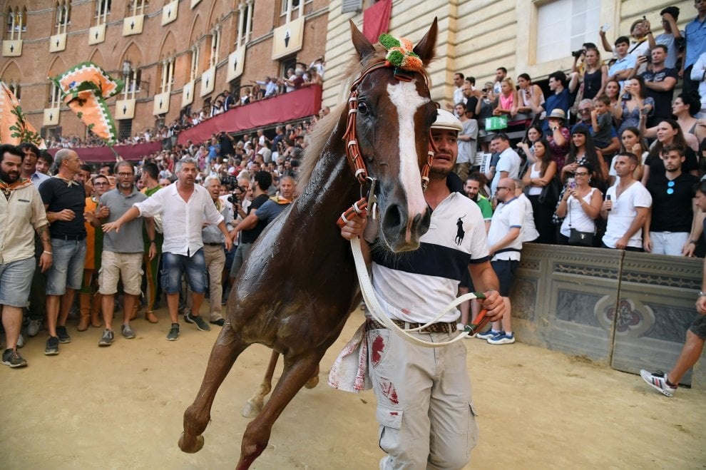 Siena, al fotofinish il cavallo 'scosso' della Selva vince il Palio dell'Assunta