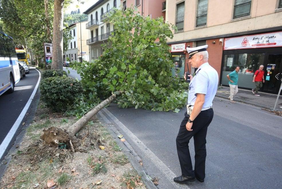 Maltempo a Firenze, cade un alberto in viale Sanzio