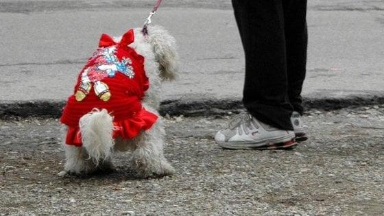 Lucca, colpisce una donna che lo aveva rimproverato per il cane