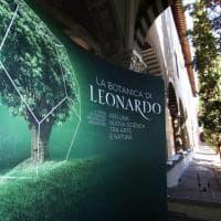 Firenze, la Botanica di Leonardo e le intuizioni green del Genio