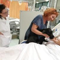 Pet therapy, il cocker Nello va a salutare il padrone ricoverato in terapia intensiva a Empoli